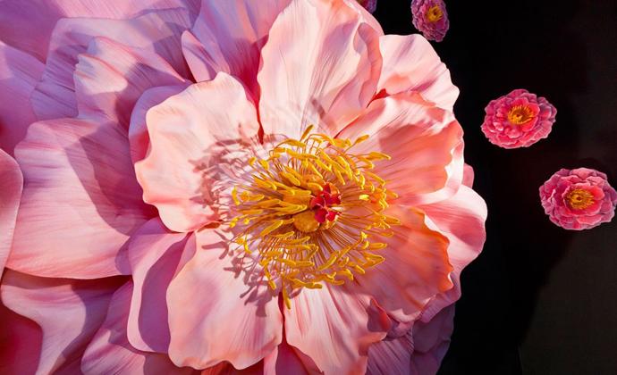 Selfridges_Apple_Flower_Windows_USP_05