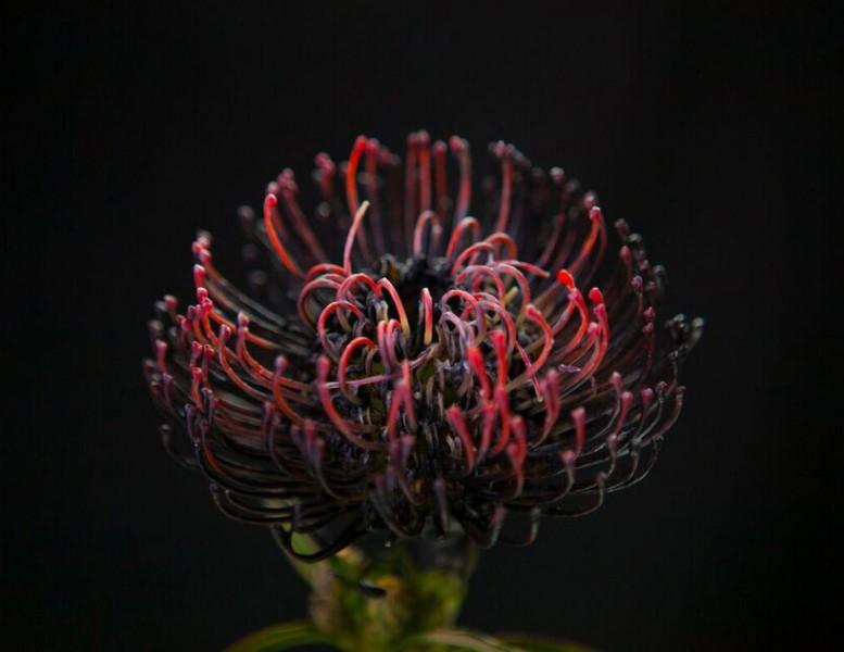 bompas-parr-london-edition-perrier-jouet-color-changing-flowers-designboom-02