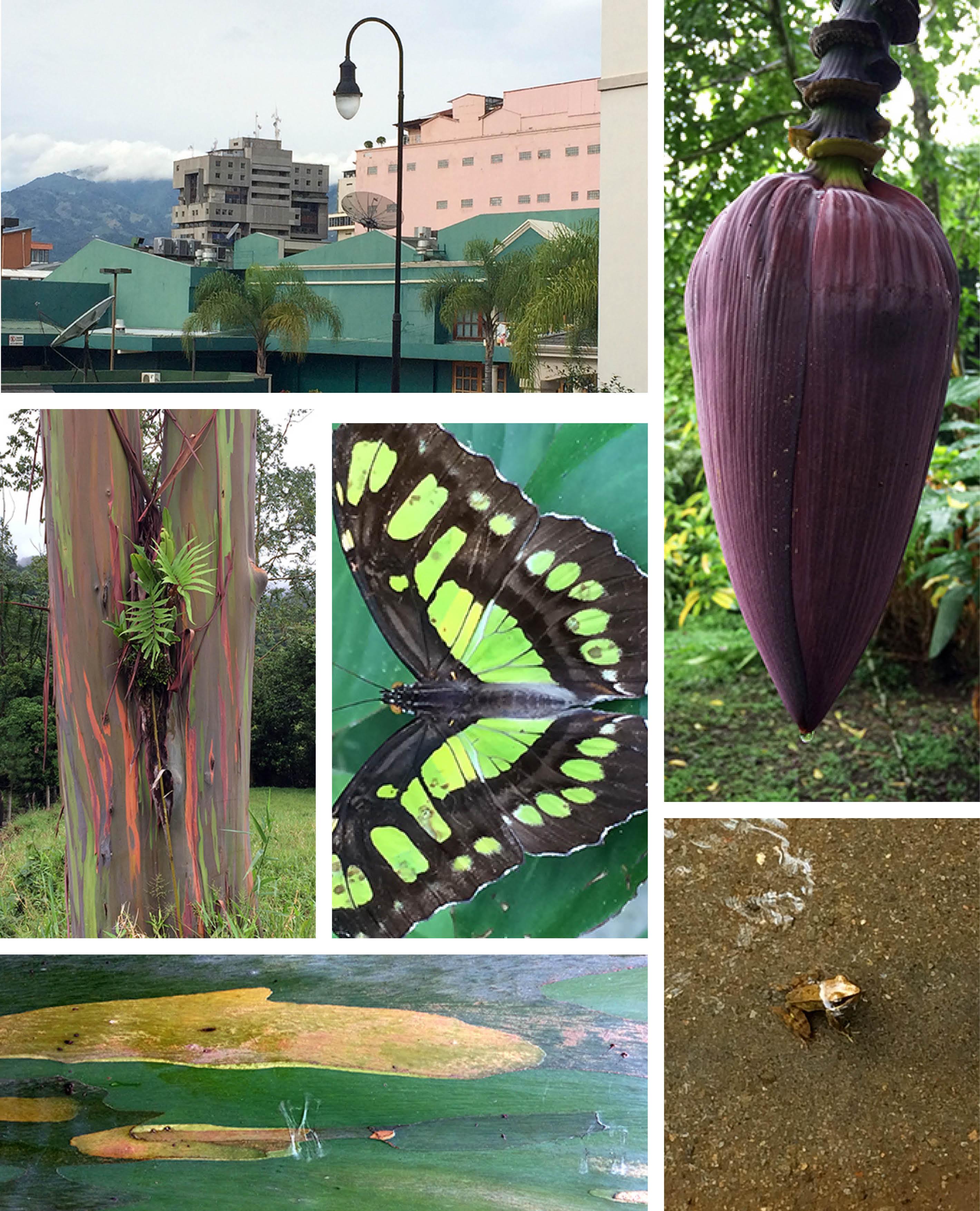 COSTA RICA COLLAGE3