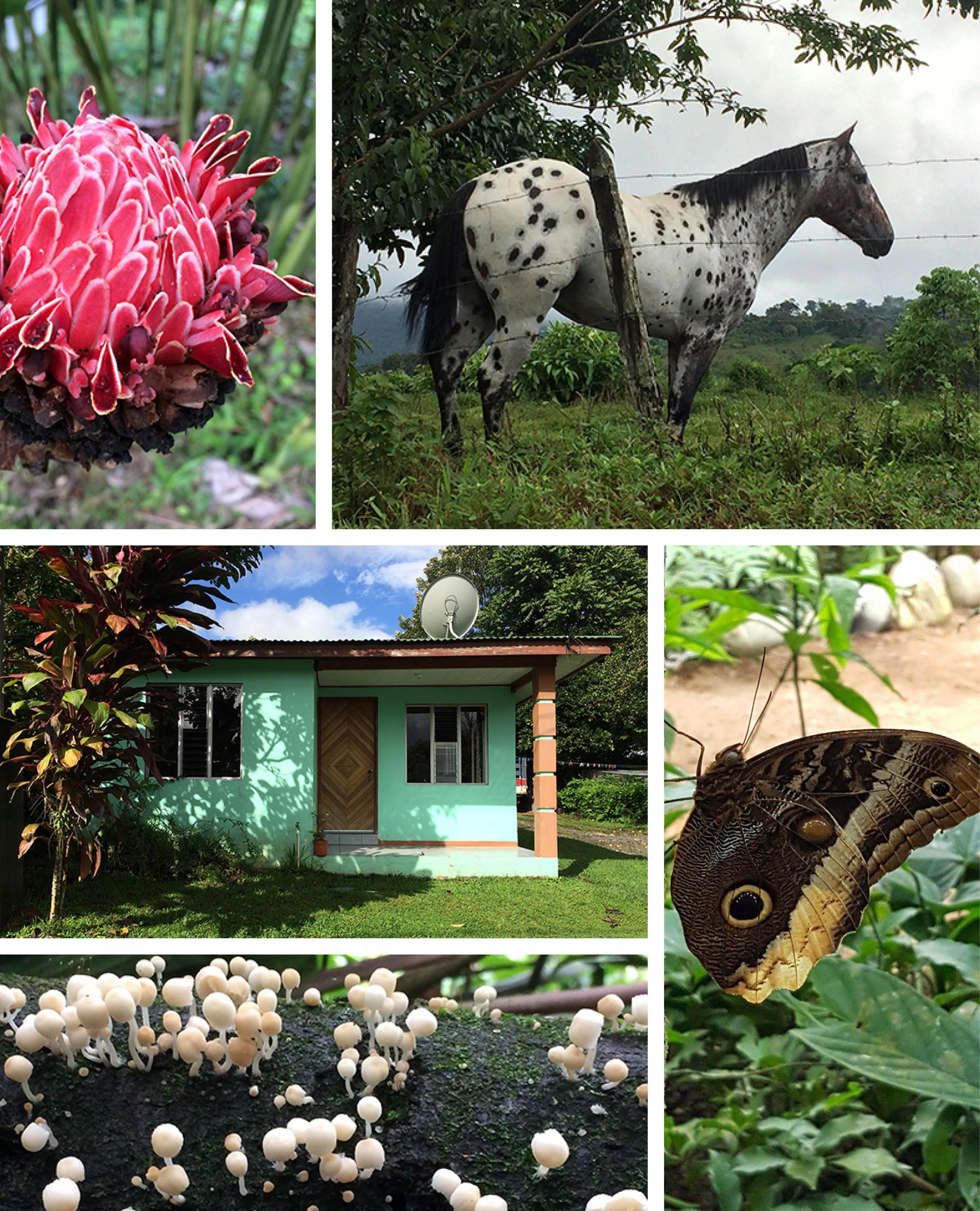 COSTA RICA COLLAGE4