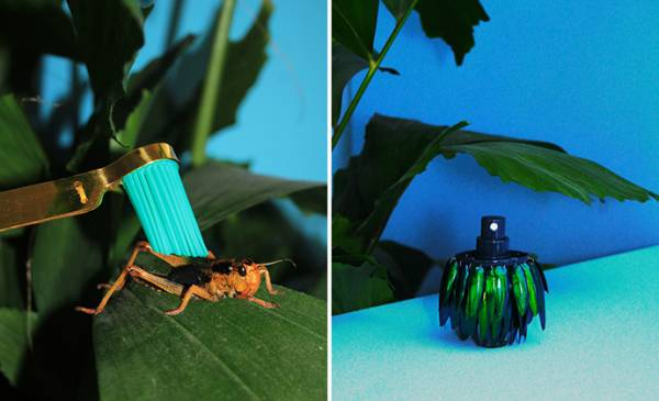 Insectology-Dutch-Design-Week-Unique-Style-Platform-1
